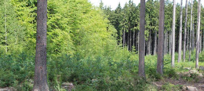 Zákaz vstupu do lesů v katastrálním území Vlašim